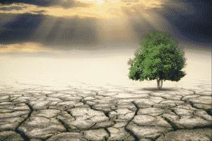 Futuristisk bild på träd på uttorkad mark